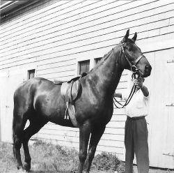 Nicky the Horse, 1948 <br> Dorothy Forsythe Collection, City of Charlottetown Archives