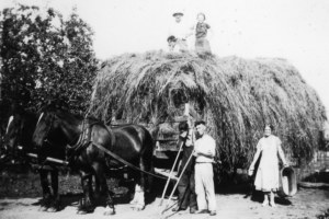 Horse and Wagon at the Andrew Farm, East Royalty, c.1935 <br> Dorothy Forsythe Collection, City of Charlottetown Archives